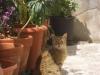 All'ombra delle piante