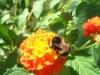 Un fiore invitante