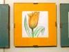 Narcisi e tulipano