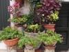 Collezione - Rocchi di colonna come fioriere