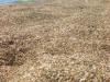 Sabbia e conchiglie