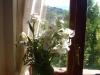 Iris alla finestra