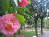 La rosa d\'inverno