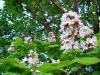 A metà primavera
