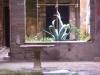 Un antico giardino