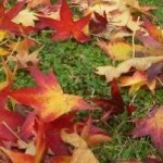 Tappeto d'autunno
